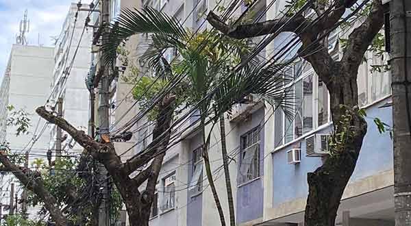 árvores em icaraí