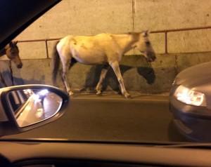 cavalos-no-tunel