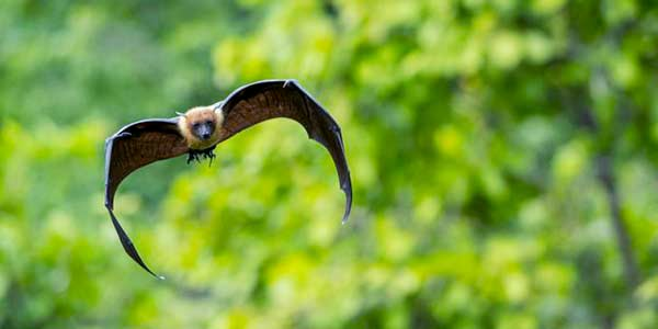 Morcego com raiva encontrado no Horto de Niterói